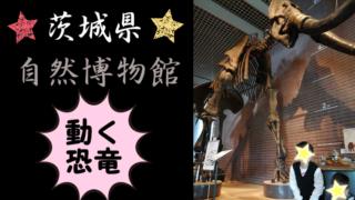 【子どもとお出かけ】茨城県自然博物館の所要時間、内容、混雑状況