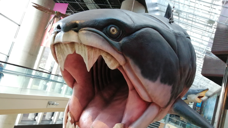 【子どもとお出かけ】茨城県自然博物館の所要時間、混雑状況