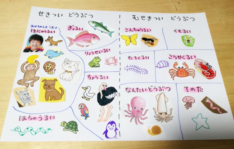 知育ポスター:生き物分類表(理科のポスター)