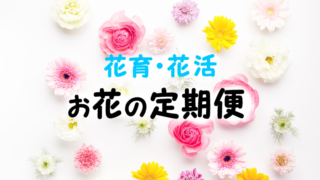 お花の定期便で子供と花育花活しよう♪ブルーミーライフ(画像あり)